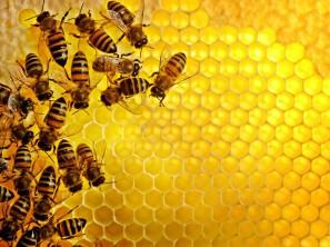 Honey+Bee+-+Honeycomb+Yellow